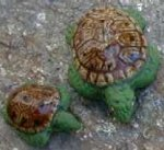 Sea Turtles-Brown Shell, Green Body  Big-32 mm; small-22 mm